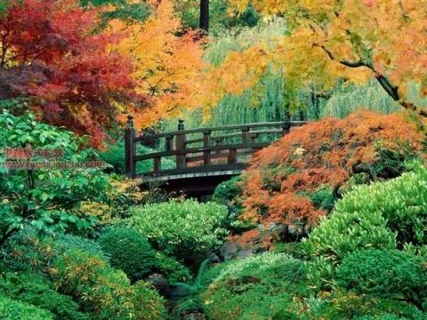 日本庭园10