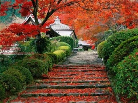日本庭园9