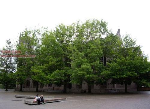 西雅图华盛顿大学5